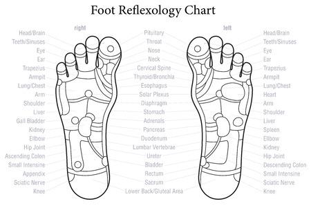 reflexologie: Pied tableau de réflexologie avec description précise des organes internes correspondants et parties du corps. Décrire illustration sur fond blanc.