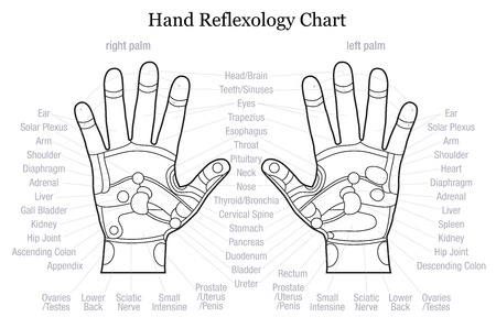 complementary therapy: Hand reflexology chart with accurate description of the corresponding internal organs and body parts. Outline vector illustration over white background.