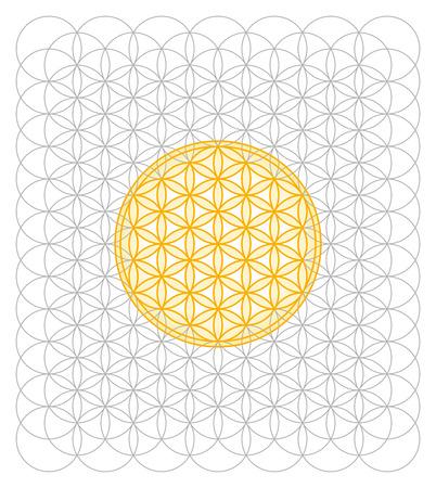 vida: Desarrollo de la flor de la vida de un mar de círculos. La geometría sagrada formando un patrón similar a una flor. Un símbolo espiritual desde la antigüedad.