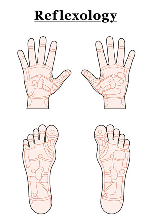 Hands and feet divided into the reflexology areas of the corresponding internal organs and body parts. Outline vector illustration over white background. Stock Illustratie