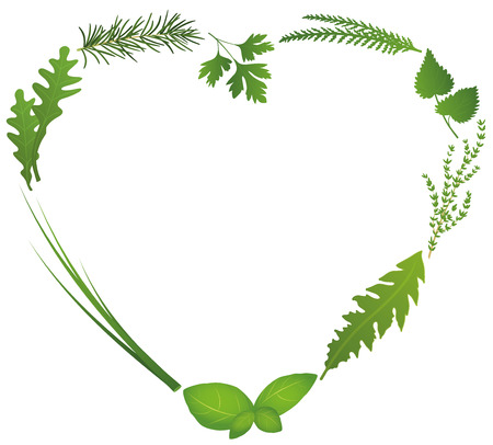 Culinary herbs for salads and cooking shape a heart. Isolated vector illustration on white background. Vector