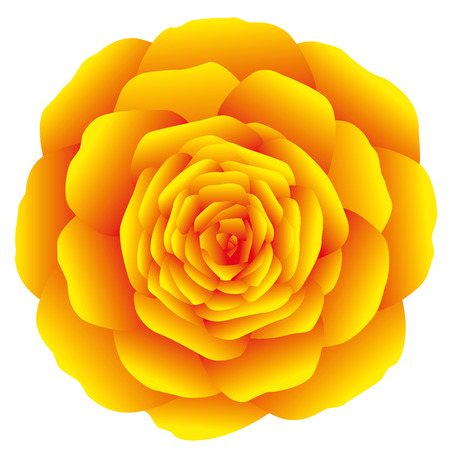 Orange marigold, carnation or rose on white background. Isolated vector illustration.