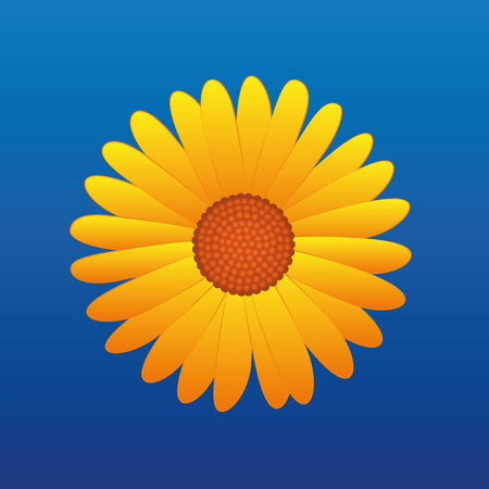 aster flower: Yellow aster on blue sky background. Vector illustration.