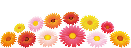 aster: Arrangement of twelve orange, yellow and pink asters. Isolated vector illustration over white background.