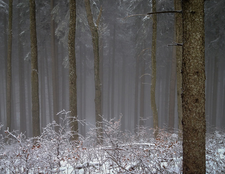 nebulous: Mysterious and magic nebulous forest in winter.
