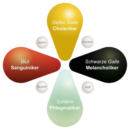 bodily: Four Temperaments sanguine, choleric, melancholic and phlegmatic