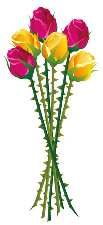 Roses with many thorns on their stalks. Isolated vector illustration on white background.