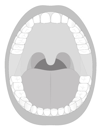 palate: Outline illustration of an open adult mouth with thirty-six permanent teeth. Abstract isolated vector illustration on white background.
