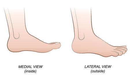 pies: Pies - vista medial interior y lateral exterior. Ilustración vectorial aislados en fondo blanco.