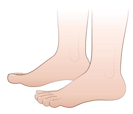 feet naked: Barefoot - illustration of two human feet - isolated vector on white background. Illustration