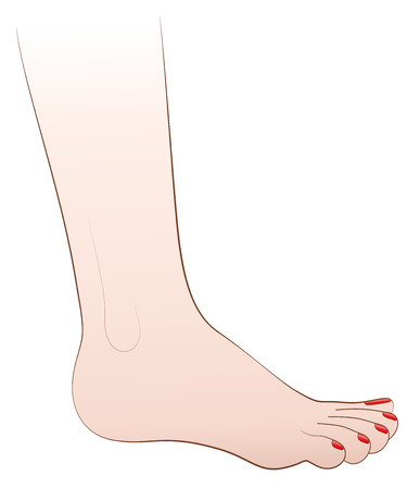 naked woman  white background: Female foot with red nail polish. Isolated illustration on white background. Illustration