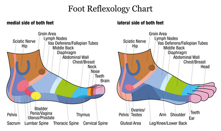 Foot reflexology chart - medial-inside and lateral-outside view of the feet - with description of corresponding internal organs and body parts. Illustration on white background. Ilustracja