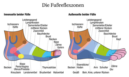 Foot reflexology chart - inside and outside view of the feet - with description of corresponding internal organs and body parts in GERMAN LANGUAGE.  illustration on white background.