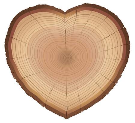 cross section of tree: Heart shaped wood slice with annual rings, as a symbol for loving nature, trees, conservation or environment protection. Isolated vector illustration on white background.