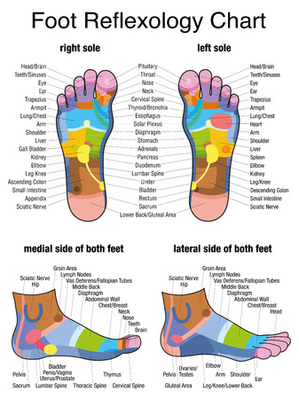 Reflex zones of the feet - soles and side views - accurate description of the corresponding internal organs and body parts. Isolated vector illustration on white background Иллюстрация