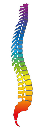 column arch: Backbone, rainbow colored human spine, as a symbol for healthy vertebras. Isolated vector illustration on white background.