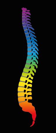 Spine - regenbooggradiënt gekleurde menselijke ruggengraat, als symbool voor gezonde wervels. Illustratie op zwarte achtergrond. Vector Illustratie