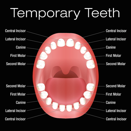 Temporary teeth with names. Vector illustration over black background.