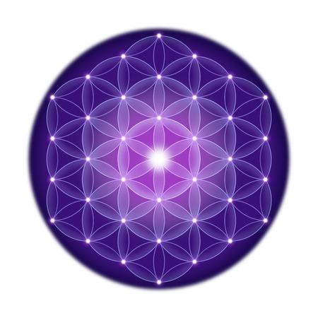 estrellas moradas: Brillante de la flor de la vida con estrellas sobre fondo blanco, un s�mbolo espiritual y geometr�a sagrada desde tiempos antiguos.