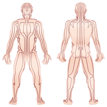 Meridians - meditating man with main acupuncture meridians - front view, back view - Isolated illustration on white background. Illustration
