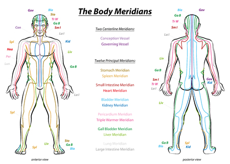 energy healing: Meridian System Chart - Male body with principal and centerline acupuncture meridians - anterior and posterior view - Traditional Chinese Medicine - Isolated illustration on white background.
