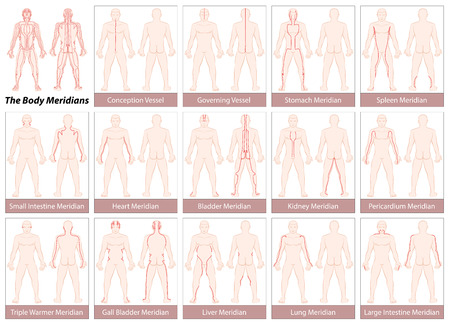Body meridians - Chart with main acupuncture meridians, anterior and posterior view. Isolated illustration on white background. Vettoriali
