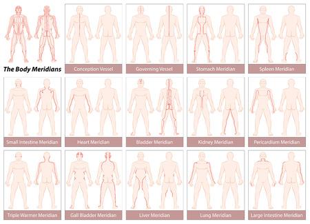 acupuntura china: meridianos del cuerpo - Tabla con los principales meridianos de acupuntura, anterior y posterior. vista ilustración sobre fondo blanco. Vectores