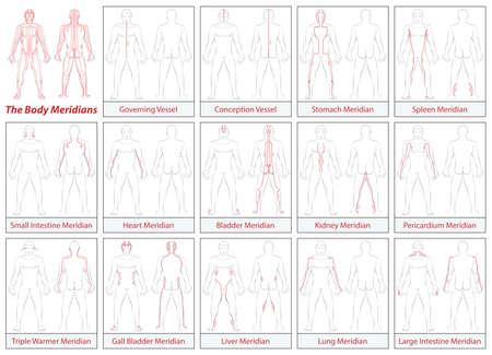 Körpermeridiane - Schematische Darstellung mit Hauptakupunkturmeridiane und ihre Strömungsrichtungen. Isolierte Darstellung auf weißem Hintergrund.