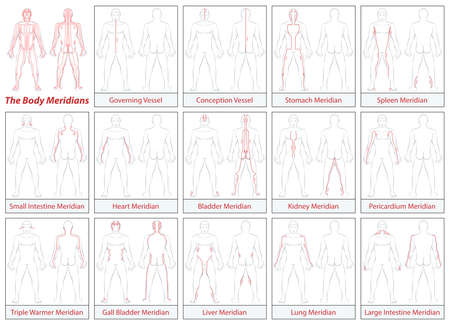 acupuntura china: meridianos del cuerpo - Diagrama esquemático de los meridianos principales de acupuntura y sus direcciones de flujo. ilustración sobre fondo blanco. Vectores