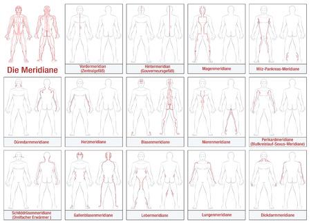 Körpermeridiane - DEUTSCH Beschriften - Schematische Darstellung mit Hauptakupunkturmeridiane und ihre Strömungsrichtungen. Isolierte Darstellung auf weißem Hintergrund. Vektorgrafik