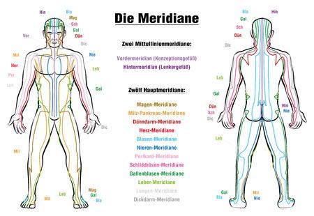 meridiano: Cuadro del sistema de meridianos - ETIQUETADO DE ALEMÁN - Carrocería masculina con los meridianos de acupuntura, anterior y vista posterior.
