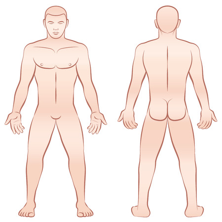 naked male: Naked male body - upright front view and back view - outline illustration on white background.