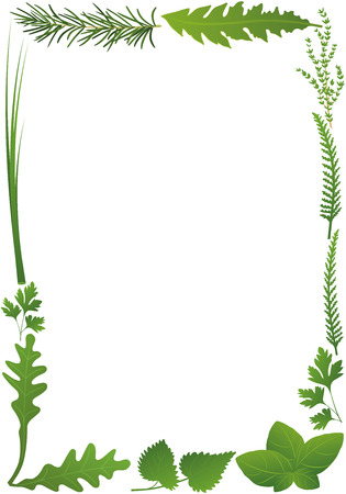 nettle: Herbs vertical frame. Isolated illustration on white background.
