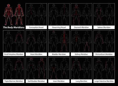 Körpermeridiane - Detaillierte Diagramm mit den wichtigsten Akupunkturmeridiane, vorderen und hinteren Ansicht. Isolierte Darstellung auf schwarzem Hintergrund. Standard-Bild - 53898747