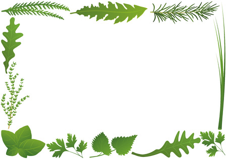 nettle: Culinary herbs forming a horizontal frame. Isolated illustration over white background.