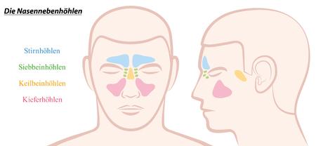 다른 색상의 남성의 얼굴에 부비동 일러스트