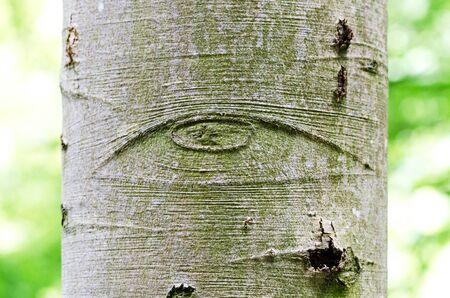 All-sehende Auge Gottes auf einer Baumrinde, auch Auge der Vorsehung bezeichnet. Symbol für das Auge Gottes, wacht über die Menschheit oder devine Vorsehung. Makro-Foto.