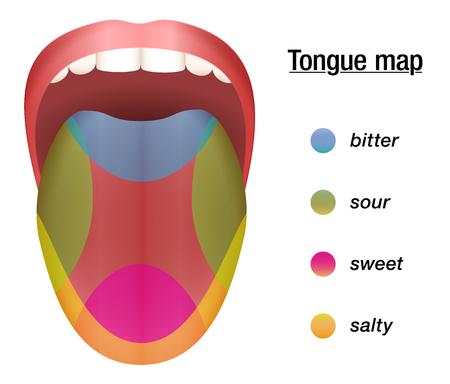 Geschmack Karte der Zunge mit seinen vier Geschmack Bereichen - bitter, sauer, süß und salzig. Illustration