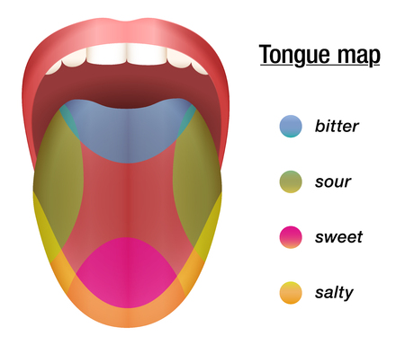 Taste map of the tongue with its four taste areas - bitter, sour, sweet and salty.