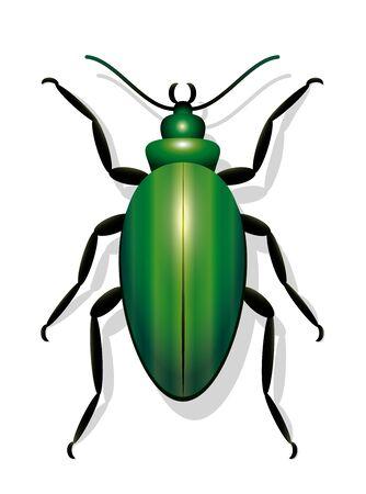 single animal: Green beetle - icon vector illustration on white background.