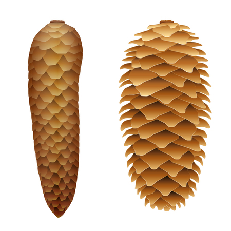 wetness: Spruce cones - with flat closed scales at humidity and protruding scales when dried.