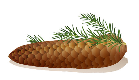 plant seed: Illustration of a spruce cone with spruce needles. Illustration