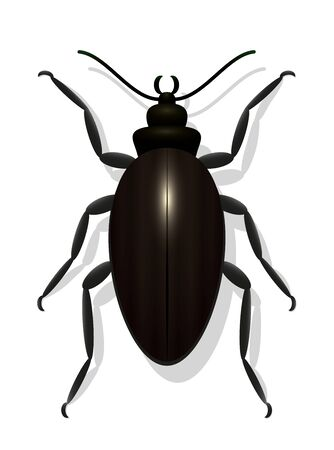 enormous: Large black beetle - icon vector illustration on white background.