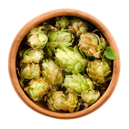 hop hops: Hops in wooden bowl on white background. Half dried seed cones from the hop plant, Humulus lupulus, used as a flavoring and stability agent in beer and as a herbal medicine. Macro food photo close up.