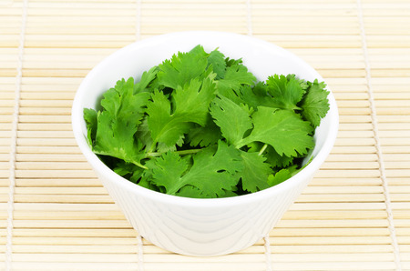 coriandrum sativum: Fresh coriander leaves, also known as cilantro, Chinese parsley and dhania, in a white porcelain bowl on white background. Green Coriandrum sativum, an edible herb. Isolated macro food photo close up.