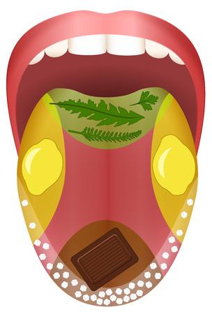 舌の 4 つの主要エリア - ハーブ、レモン、チョコレート、塩の粒で苦い、酸っぱい、甘い、塩辛い表されます。  イラスト・ベクター素材