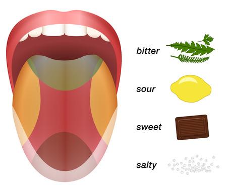Bitter, sauer, süß und salzig Geschmack Vertreten durch Kräuter, Zitronen, Schokolade und Salzkörner auf einer Zunge.