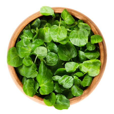 edible plant: Watercress in wooden bowl. Nasturtium officinale, an edible green aquatic plant and leaf vegetable, used in salads or in soups. Isolated macro food photo close up from above on white background.