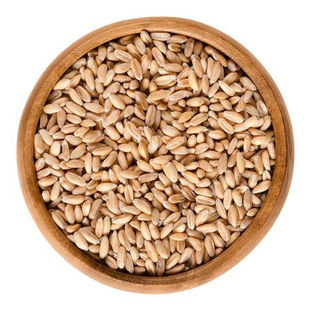 cultivo de trigo: Spelt without husks in wooden bowl. Triticum spelta, also dinkel or hulled wheat, a staple and rediscovered relict crop in Europe. Isolated macro food photo close up from above on white background. Foto de archivo