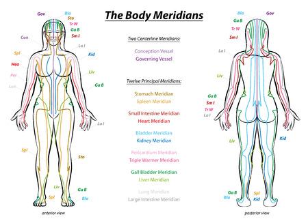 MERIDIAN SYSTEM CHART - Weiblicher Körper mit Haupt- und Mittel Akupunktur-Meridian - vordere und hintere Ansicht - Traditionelle Chinesische Medizin. Illustration